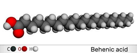 Behenic acid, molecule. It is docosanoic acid, straight-chain, long-chain saturated fatty acid. Molecular model. 3D rendering. 3D illustration Imagens