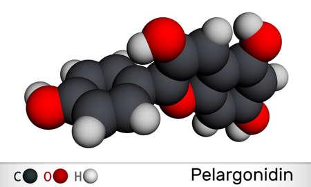 Pelargonidin molecule. It is anthocyanidin cation, plant pigment, orange color. Molecular model. 3D rendering. 3D illustration