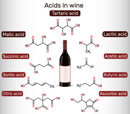 Acids in wine. Tartaric, malic, lactic, citric, acetic, ascorbic, butyric, sorbic, succinic acid. Skeletal chemical formulas. Vector illustration