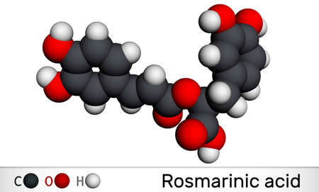Rosmarinic acid, molecule. It is polyphenol, phenylpropanoid, monocarboxylic acid, non-steroidal anti-inflammatory drug, antioxidant, serine proteinase inhibitor. Molecular model. 3D rendering.