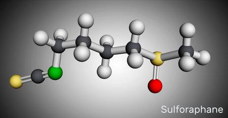 Sulforaphane, sulphoraphane molecule. It is isothiocyanate, antineoplastic agent, plant metabolite, antioxidant. Molecular model. 3D rendering. 3D illustration