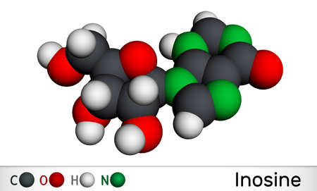 Inosine molecule. It is purine nucleoside, commonly occurs in tRNA. Consists of hypoxanthine connected to ribofuranose glycosidic bond. Molecular model. 3D rendering. 3D illustration