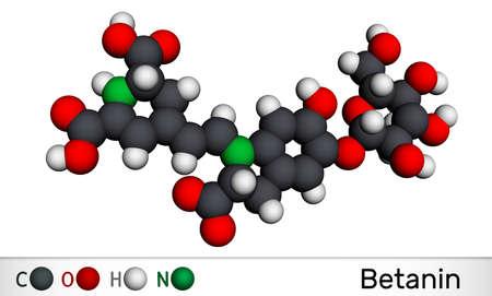Betanin, molecule. It is betalain plant pigment, red glycosidic food dye, E162. Molecular model. 3D rendering. 3D illustration