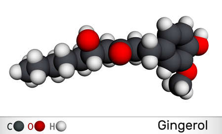 Gingerol molecule. It is phenol phytochemical compound, antineoplastic agent, is found in fresh ginger. Molecular model. 3D rendering. 3D illustration