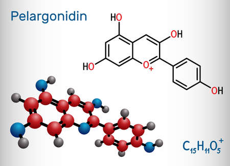 Pelargonidin molecule. It is anthocyanidin cation, plant pigment, orange color. Structural chemical formula and molecule model. Vector illustration