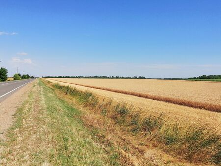 wheat field and the road on a hot summer day Banco de Imagens