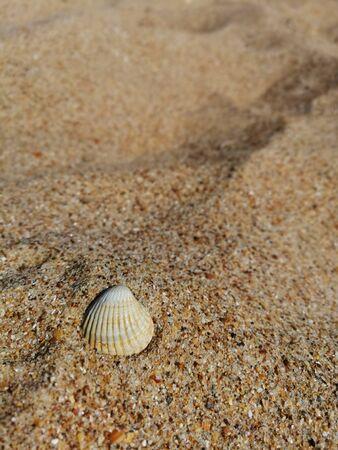one shell on the yellow sand Banco de Imagens