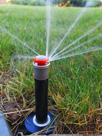 automatic irrigation system for the garden near the sidewalk Banco de Imagens