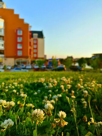 white clover on the background of colorful houses
