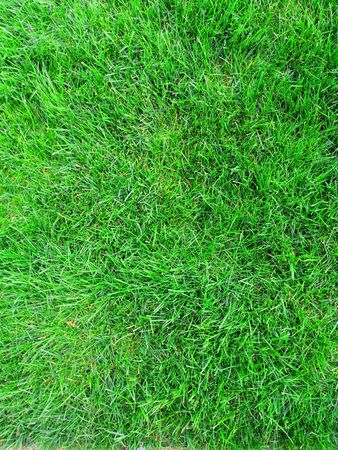 background of green grass, eco texture for banner