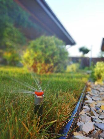 automatic irrigation system for the garden near the sidewalk Standard-Bild
