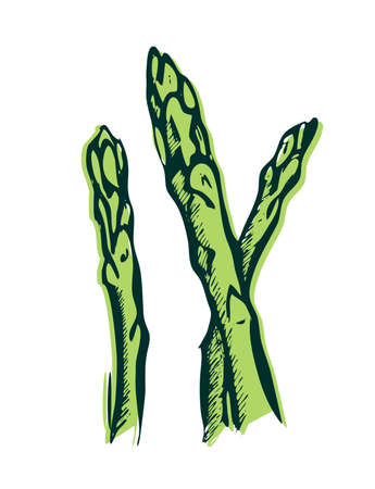 asparagus sketch color. Asparagus is a diet vegetable. healthy food - hand drawn color illustration. Vecteurs