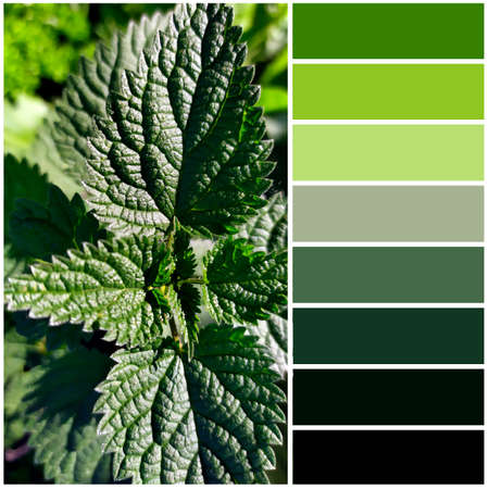 Nettle leaves close-up. The color palette coming from the image corresponds to the shades of autumn.