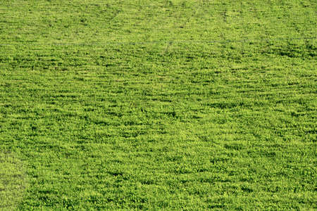Football field. Green lawn on the playground on a summer sunny day.