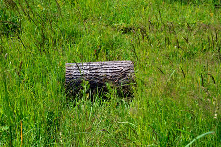 Lonely log lying on the grass. Deforestation. Protection of Nature.