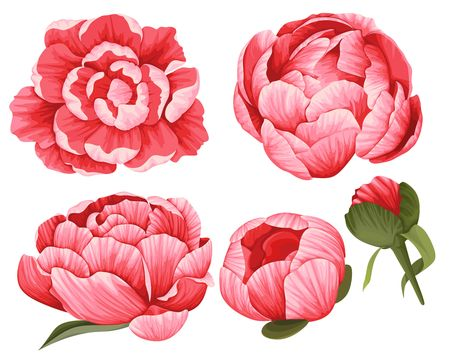 Set of 5 Red beautiful Flowers