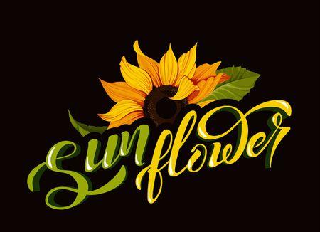 ClipArt vettoriali di girasole con scritte a mano segno calligrafia fiore nome giallo autunno botanica illustrazioni