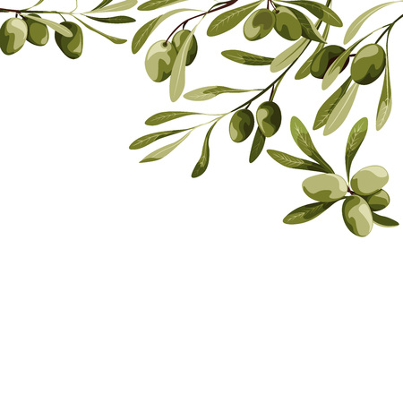 Vector background with olive tree decoration. Vegan food illustrations