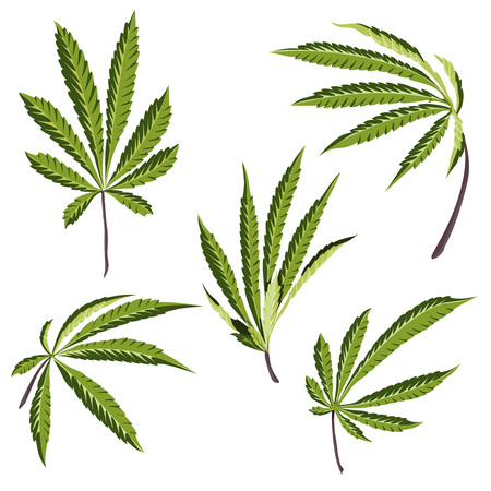 Vector Hemp plant illustrations set of 5 leaves of green cannabis isolated clip arts Çizim
