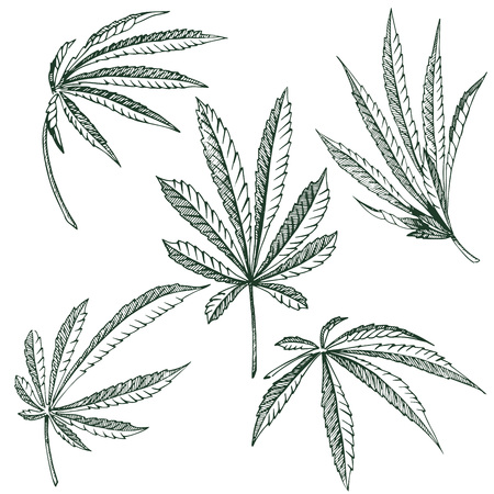 Vector Hemp plant illustrations set of 5 leaves of black and white cannabis isolated clip arts Çizim