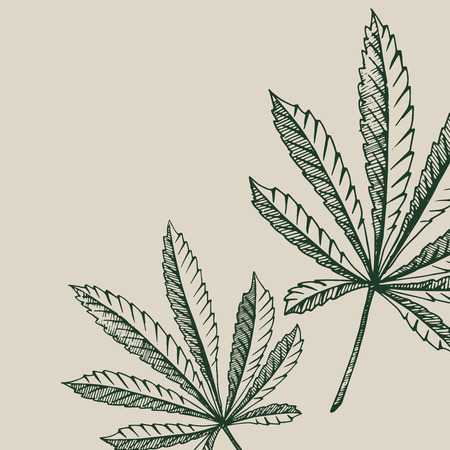 Vector outline backgrounds of hemp plant on a beige square cannabis leaves