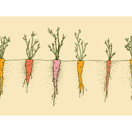 Vector carrots hand drawn illustration, seamless border with funny vegetable