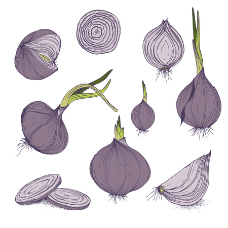 Vector food clip art set of onions hand drawn isolated vegetables purple and green colors Çizim