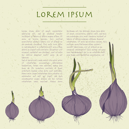 Vector background with onion square template for social media with vegetables Çizim