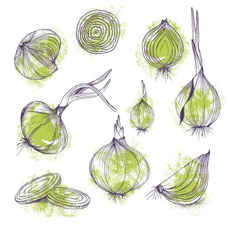 Vector food clip art set of clear onions hand drawn isolated vegetables purple and green colors