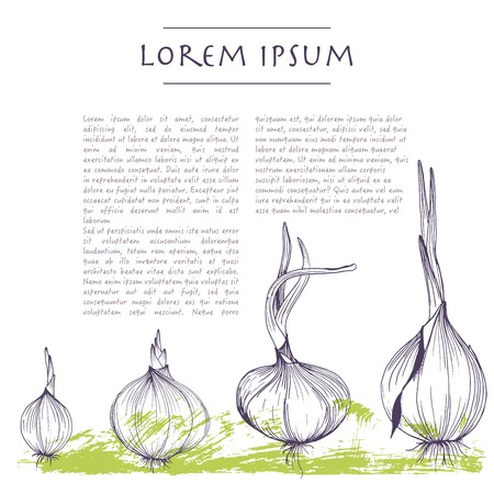 Vector background with onions square template for social media with vegetables and texts