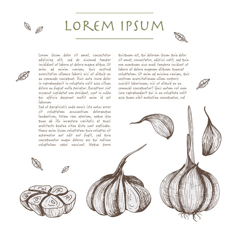 Food background with garlic vegetables Hand drawn white social media template Çizim
