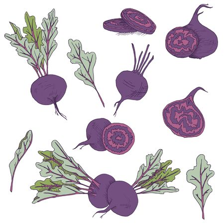 Vector clip art set of beetroots. isolated purple vegetables on white background Иллюстрация
