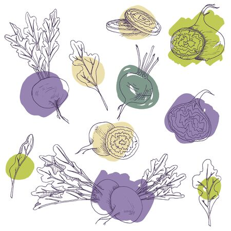 Vector clip art set of beetroots. isolated hand drawnl vegetables on white background with brush strokes
