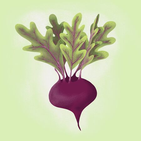 Illustration of beet root vegetable. Food image with texture for social media posts
