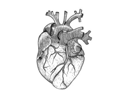 Vector realistic heart . Anatomy human organ image for black and white hipster t-shirt design