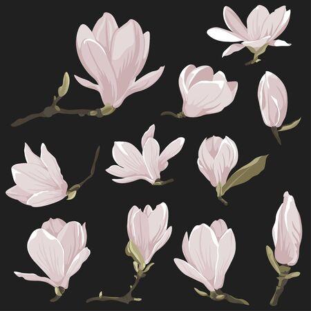 Vector flowers clip art of magnolia set. Floral pink images on a black background. Decorative design elements. Natural style elements Vectores