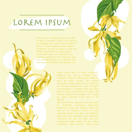 Vector yellow background with brush strokes and ylang ylang flowers on the corner Wild tropical flower with text