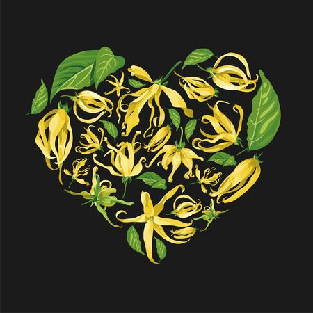 Floral heart shape illustration with ylang ylang flowers on black background. Yellow tropical flowers with long petals with green leaves
