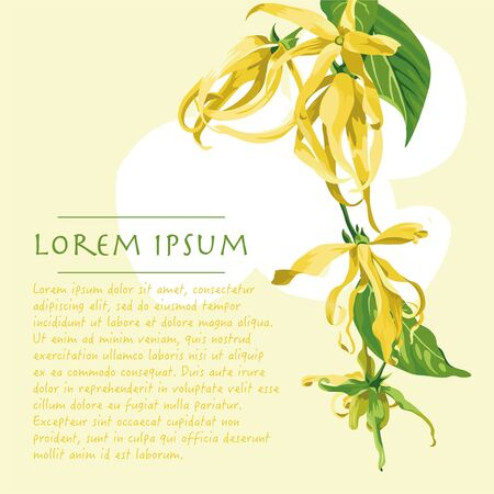 Vector yellow background with ylang ylang flowers on the corners. Wild yellow tropical flowers with text
