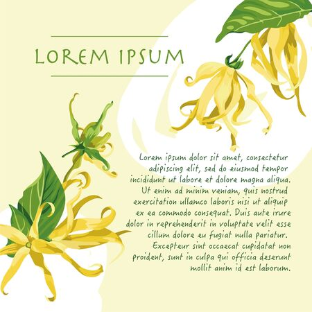 Vector yellow background with brush strokes and ylang ylang flowers on the corners. Wild tropical flower with text Vectores