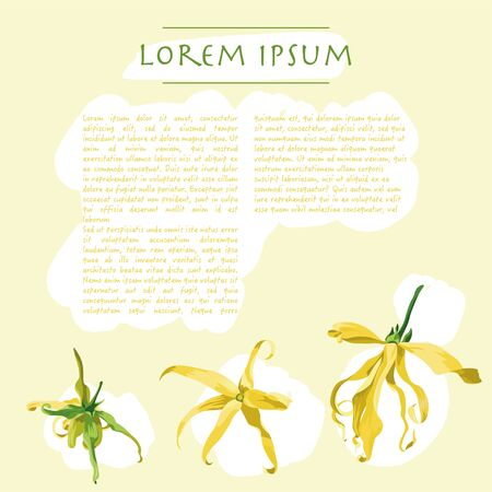 Floral template with ylang ylang flowers on a yellow background. Background for social media publications