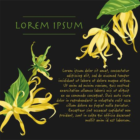 Vector dark grey background with ylang ylang flowers on the corners. Wild yellow tropical flowers with text Vectores