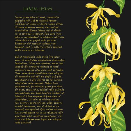 Vertical line of ylang flower on black background with text. Floral illustration with yellow tropical flowers for magazine pages