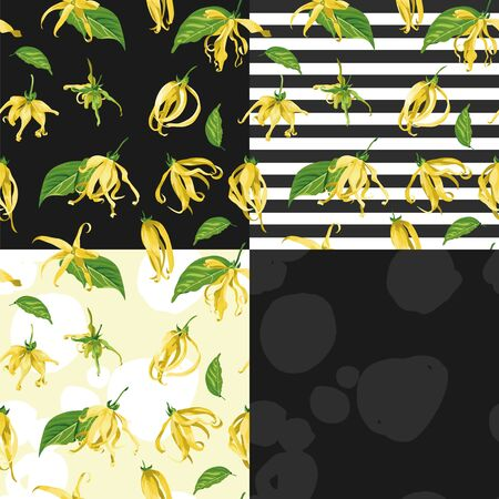 Vector seamless patterns set with ylang ylang on different backgrounds. Floral Texture with wild yellow tropical flower