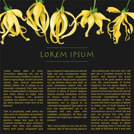 Horizontal line of ylang ylang flower on black background with text. Floral illustration with yellow tropical flowers for magazine pages