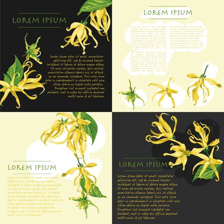 Vector backgrounds set with ylang ylang flowers on the corner. Wild yellow tropical flowers with text for social media templates