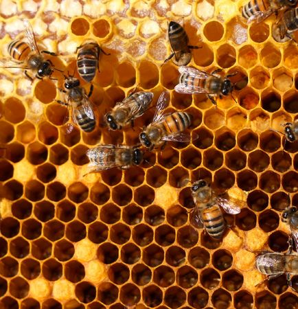bee pollen: bees inside the hive Stock Photo