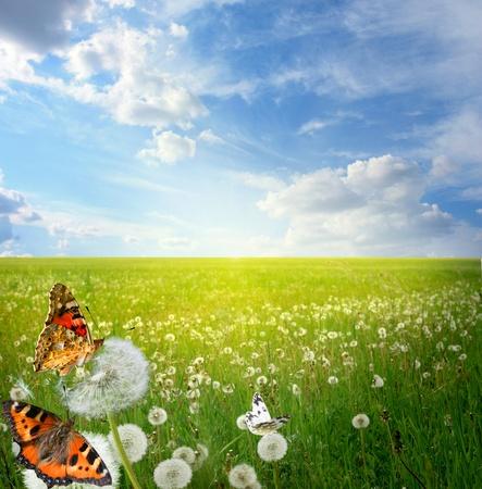 mariposa azul: Hermoso paisaje con mariposas de colores Foto de archivo