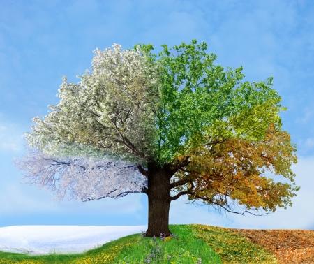 cuatro elementos: Cuatro temporada de árbol Foto de archivo
