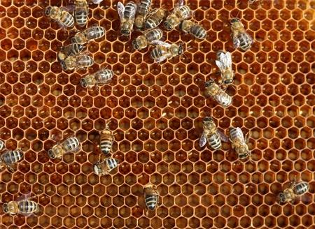 praiseworthy: bee